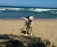 Bimbo, Leron & Sheba :) - Summer Love Life Laughs