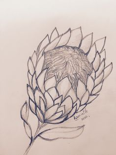 Protea sketch - my mums favourite flower Protea Flower, Flowers, Drawings, Claire, Sketch, Warm, Design, Sketches, Sketch Drawing