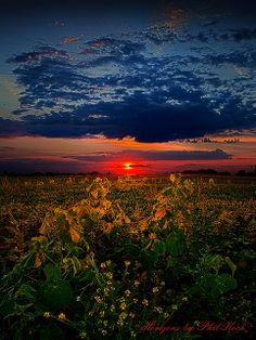 Morning Lit, Wisconsin, by Phil Koch  ♥ ♥ www.paintingyouwithwords.com