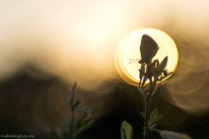 Licenide backlight by Alberto Baruffi on 500px