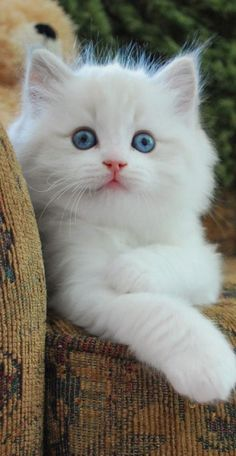 this is one pretty kitty