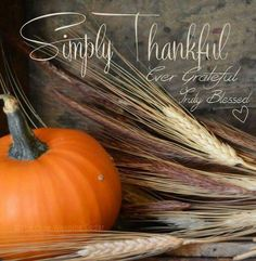 Happy Thanksgiving from Stein Diamonds! Happy Thanksgiving Images, Thanksgiving Background, Thanksgiving Prayer, Thanksgiving Blessings, Thanksgiving Greetings, Thanksgiving Decorations, Fall Decorations, Thanksgiving 2013, Thanksgiving Wallpaper