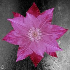 Clematis: Link to my website and online store in my bio. Prints framed and matted cell phone cases calendars and other products are all available. Thank you!  #chrisharrisart #digitalart #picture #fineart #prints #photoshop #adobe #artofinstagram #digitalartist #graphicdesign #creativeart #photoshopskills #3dart #clematis #flower #nature #petals #garden #floral #blooming #closeup #textured #macrophotography #gardenblooms #instaflower