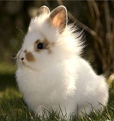 Rabbits make intelligent, friendly and quiet house pets. The average life span for a bunny is 7 to 10 years with records of up to 15 years of age reported. HOW TO TAKE CARE OF A RABBIT? The following information is provided to help you enjoy a happy, healthy relationship with your little friend.