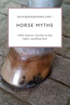 Busting horse myths - white hooves, braiding on the right, cold weather and blankets, and winter coats.