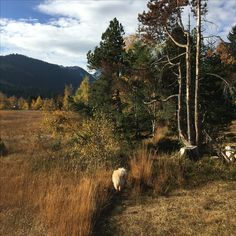 Country Roads, Autumn, Mountains, Dogs, Nature, Travel, Doggies, Fall, Naturaleza