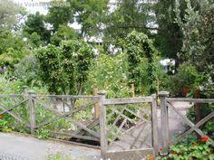 Versoja Vaahteramäeltä: Inspiraatiota hyötyviljelyyn Christchurch Botanic Garden, New Zealand