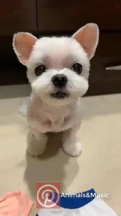 Cute Baby Dogs, Cute Little Puppies, Cute Funny Dogs, Cute Little Animals, Cute Funny Animals, Cute Cats, Cute White Puppies, Very Cute Dogs, Tiny Puppies