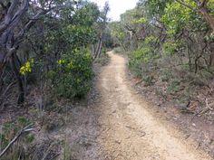 Path with Acacia Pycnantha