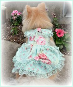 For the love of white: Shabby Chic Doggie Dresses