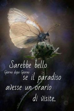 I would have so many things to tell you and I would like to embrace you .- Magari…avrei tante cose da dirvi e vi vorrei abbracciare. Maybe … I would have so many things to tell you and I would like to embrace you . I Miss U, Mamma Mia, To Tell, Cool Words, You And I, Good Morning, Best Quotes, Told You So, Humor