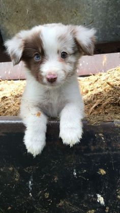 Taking Puppy Photos - Tips You Can Use! – Kelly Radtke – Ich Folge Taking Puppy Photos – Tips You Can Use! – Kelly Radtke – up - Cute Little Animals, Cute Funny Animals, Funny Cats, Funny Humor, Cute Dogs And Puppies, I Love Dogs, Doggies, Puppies Tips, Adorable Puppies
