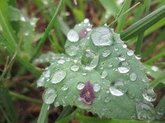 More dewy leaf!