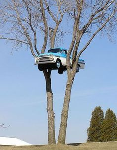 How did this car get up in that tree? Is the car from another planet? Was there a flood and the car ended up at the top of the tree? Write a story about it!