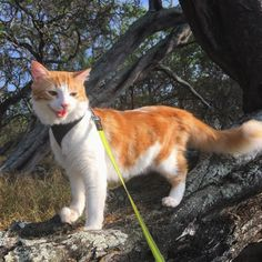 Adventure cat on harness
