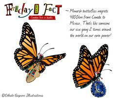 Monarch butterflies migrate 4800km from Canada to Mexico.  That's like someone our size going 2 times around the world on our own power! Amazing! To visit other Fun Friday Facts click here!