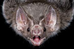 Bat Zone at the Cranbrook Institute of Science