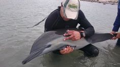Rescata PROFEPA dos ballenas y un delfín en BCS