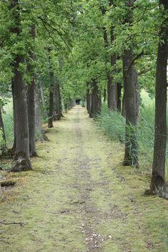 Waar wandelen we naar toe?