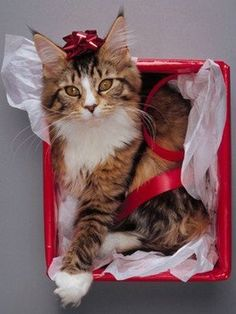 Christmas Cats                                                                                                                                                                                 More