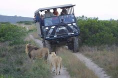 Game Drives near Mossel Bay - Accommodation in Mossel Bay Game Reserve, Activities, Games, South Africa, Google Search, Gaming, Plays, Game, Toys