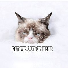 Grumpy Cat .. The winter weather advisory on the other side of the country? Good!