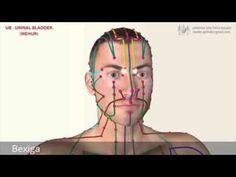 LI - LARGE INTESTINE MERIDIAN (Meridijan Debelega črevesa) - YouTube