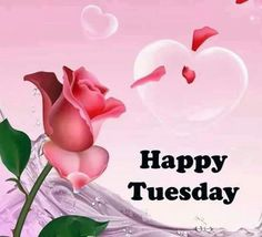 319 Best Happy Tuesday Images In 2019 Tuesday Quotes Good Morning