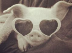 we will have a pet pig named notorious p. as a nod to one of brocks favorite rappers and call him piggy as a nod to my favorite book lord of the flies. Houle when we get a pig, we have to name it this. Pet Pigs, Baby Pigs, Baby Animals, Funny Animals, Cute Animals, Animal Pictures, Cute Pictures, Teacup Pigs, Mini Pigs