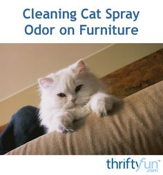 1000 Images About Cleaning Anything On Pinterest