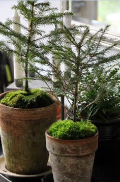 Minimalist: Maybe pot up some tiny junipers with moss in the pots.