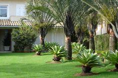 Jardim tropical com Bromélias e Palmeira-triangulo.