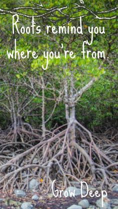 Roots grow deep, check out our travel blog. #travel #travelblogging #adventure #advice