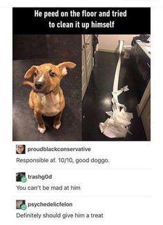 Good boys.