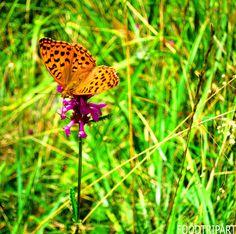 butterfly, papillon, orang, rose, vert, noir, black, pink
