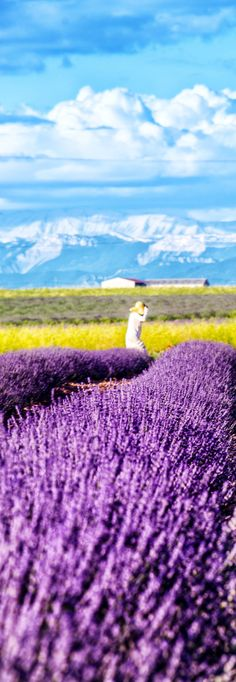 Stunning Lavender Fields in Provence, France   |   13 Amazing Photos of Lavender Fields that will Rock your World