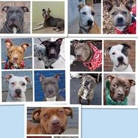231 MORE SIGNATURE NEEDED AND WE ARE GOOD TO GO.....STATE OF NEW YORK: STOP LEGALLY MURDERING ANIMALS |  New York kills more animals than any other state and the guidelines for killing these dogs are so strict for many breeds that it makes it almost impossible to save these dogs. PLEASE click for petition details and SIGN and share petition. Thanks.
