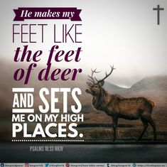 He makes my feet like the feet of deer, And sets me on my high places. Psalms 18:33 NKJV Best Bible Verses, Spiritual Needs, Psalms, Deer, Reindeer
