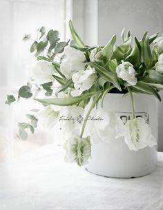 Green Flowers, Summer Flowers, Pretty Flowers, White Flowers, White Tulips, Interior Plants, Spring Green, Floral Arrangements, Flower Arrangement