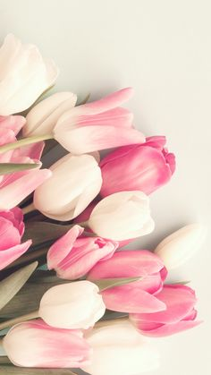 pink white tulips, tulip blooms, spring flowers, blossoms, flower, pink flower, white flower, blush tulip, soft pinks, mix of tulips, pink white tulip mix