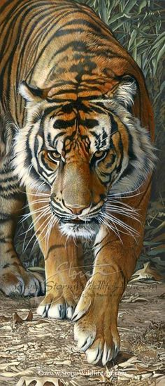 """Tiger Walkin'"" -Original Paintings Original Paintings by Scot Storm - Original Paintings by Scot Storm Ask about our Payment Plan Option!"