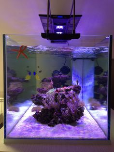 Most Decorated Marine Coral Reef Aquarium, Glass Aquarium, Marine Aquarium, Saltwater Tank, Saltwater Aquarium, Aquarium Fish, Nano Aquarium, Marine Fish Tanks, Led Aquarium Lighting