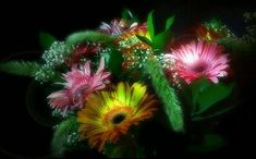 Beautiful colorful pictures and Gifs: Beautiful Flower Pictures. Beautiful Flowers Pictures, Beautiful Gif, Beautiful Roses, Flower Images, Flower Pictures, Colorful Pictures, Gifs, Bouquet, Fractals
