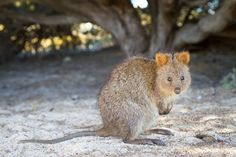 Cute doesn't begin to describe these bewitching beasts from the Land Down Under.