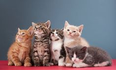 7 Super Clever Cats (Videos)