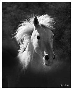 Framed Horse Portrait V Print