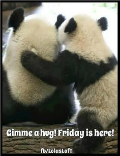 I just realized i pin alot of Pandas. and i aint stopping now! I'm pinning your pins of Pandas. Most Beautiful Animals, Beautiful Creatures, Cute Baby Animals, Animals And Pets, Photo Panda, Image Panda, Sweet Pictures, Panda Mignon, Panda Hug