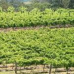 Explore New Zealand Wines at www.nzwinedirectory.co.nz