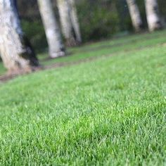 <p>A green lawn is the coveted prize of every homeowner. Nothing feels better than walking through the cool grass in your bare feet during summer. Though we love our own little piece of nature, most homeowners know a beautiful lawn doesn't necessarily come naturally. It takes effort—and knowledge. </p><br/> <p>Learning how to plant grass seed and when to water and fertilize the lawn is a worthwhile endeavor. You may have learned how to mow a lawn when you we...