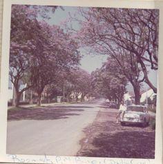The jacaranda trees on Boom Street, Pietermaritzburg Earth And Solar System, Jacaranda Trees, Vintage Family Photos, Family Photo Album, Kwazulu Natal, Source Of Inspiration, Capital City, Natural World, South Africa